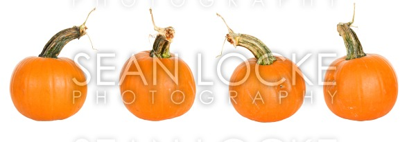 Pumpkin: Stock Photography Content by Sean Locke